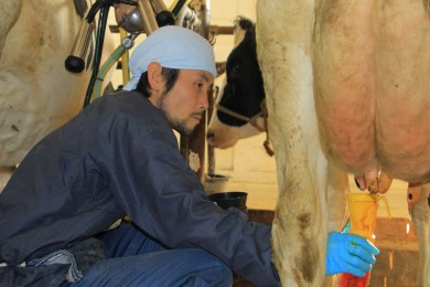 牛と生きる