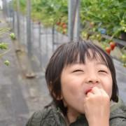 苺摘み-005